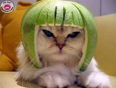 Un chat, un citron ?