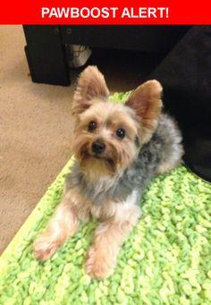 Please spread the word! Thumper was last seen in Santa Fe Springs, CA 90670.    Nearest Address: Near Telegraph Rd & Norwalk Blvd