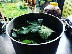 Tijd om weer een essence te trekken van de vandaag gesnoeide vijgenbladeren. Ik maak er uiteindelijk voor het grootste deel een lichte siroop van.  Grappige bijkomstigheid is dat de smaak doet denken aan kokos... maar dan anders natuurlijk... Het blijft geinig hoe er wanneer je jezelf de beperking oplegt dat je enkel mag koken met producten die hier 'kunnen' gro Cooking, Plants, Cuisine, Kitchen, Plant, Brewing, Planting, Planets, Kochen