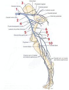 image veins for term side of card