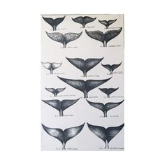"""I've long loved the fact that the fluke or fin of a whale is as personal and individual as our finger print and each whale can be identified by the markings upon the fluke. The flukes of whales from species to species possess different shapes, sizes, colors and markings, from the magnificent blue whale to the magical narwhale.This is an archival print of my original pen and ink drawing.*Approximate size~ 7.5"""" x 10"""" (unmatted"""