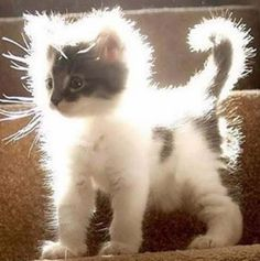 Awww, look at the halo on this kitten, I think I shall call her Angel
