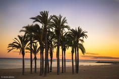 La vida detrás de las palmeras - Villajoyosa españa