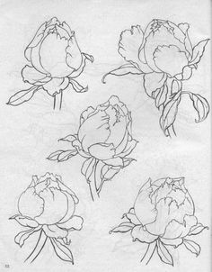 Flower Line Drawings, Botanical Line Drawing, Flower Sketches, Botanical Drawings, Botanical Art, Drawing Sketches, Art Drawings, Peony Painting, Fabric Painting