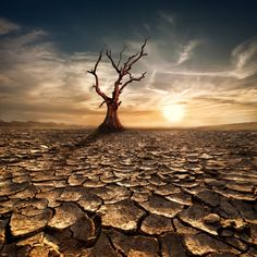 Help Your Trees Survive Drought