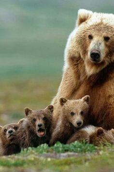 Brown bear & cubs