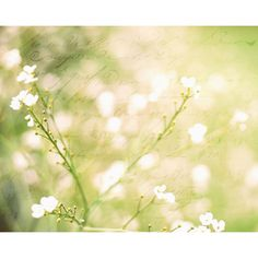 Delicate white flowers - dreamy meadow - yellow green spring - cottage... ❤ liked on Polyvore