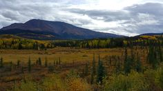 Fall in love with the autumn colours of northern British Columbia - Imgur