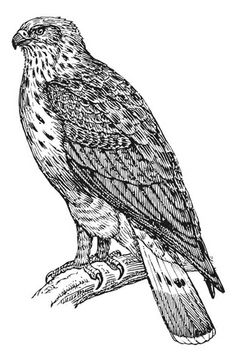 Secretary bird other raptor coloring page For the kids