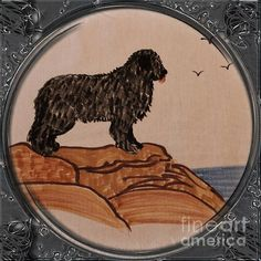 Newfoundland Dog - Porthole Vignette by Barbara Griffin. This vintage Newfoundland scene is a drawing on fabric of a black Newfoundland dog. These dogs were used by fishermen to haul loads of nets