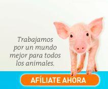 Igualdad Animal trabaja por un mundo mejor para todos los animales. Afíliate ahora en su web http://www.igualdadanimal.org/