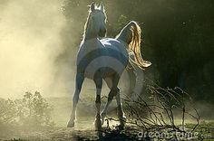 Download Arabian Horse Royalty Free Stock Image for free or as low as 0.47TL. New users enjoy 60% OFF. 22,126,196 high-resolution stock photos and vector illustrations. Image: 1343906