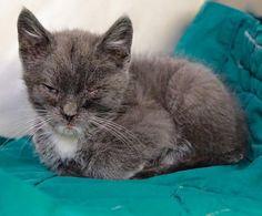 SANDY – A1077519 | NYC AC&C Urgent Cats
