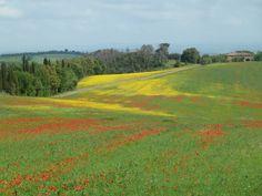 Spring fields, Murlo