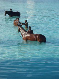 Barbados - horses | by NigelDurrant