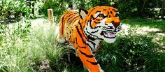 How are your LEGO building skills? Check out these life-size Safari creations at the Bronx Zoo!