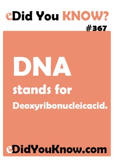 DNA stands for Deoxyribonucleicacid. http://edidyouknow.com/did-you-know-367/