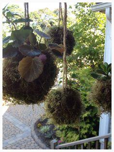 Japanese string gardens at Calgo Gardens. http://calgogardens.com/