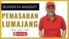 Pemasaran Maggot BSF Lumajang (Pengembangan Ternak Maggot BSF) Black Soldier Fly, Polo Shirt, T Shirt, Dan, Mens Tops, Supreme T Shirt, Polos, Tee Shirt, Polo Shirts