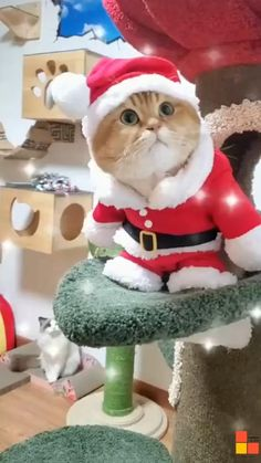 Cute Baby Cats, Cute Cat Gif, Cute Cats And Kittens, Cute Funny Animals, Cute Baby Animals, Kittens Cutest, Funny Cats, Cute Babies, Merry Christmas Gif