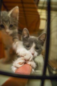 https://flic.kr/p/Cq1YbS | Kittens Grabbing Finger 1 | Cute Cats