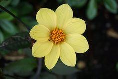 Flor, Flora, Naturaleza, Floración