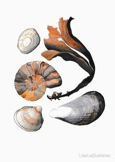 Beach treasures collection 2 by Lisa Le Quelenec. Available as reproductions, greetings cards and notebooks.