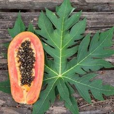 Papaya leaves have a high concentration of papain & other enzymes, as well as various phytonutrients & antioxidants. They help promote digestion & prevent constipation. Papaya Leaf Extract, Papaya Tree, Health And Wellness, Health Fitness, Healing Herbs, Medicinal Plants, Natural Remedies, Benefit, Vegetable Gardening