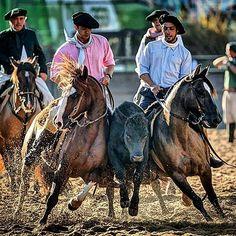 Paleteadas FICCCrioulos - Dudu e Caco Souza Farm Animals, Animals And Pets, Horse Adventure, Cowboy Pictures, Real Cowboys, Cowboy Up, Whitetail Bucks, Appaloosa, Horse Breeds