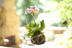 The first time I saw a kokedama string garden was right here, on Craftzine. Being a bonsai and ikebana enthusiast, I was captivated by yet another amazingly beautiful Japanese gardening method. I'v...