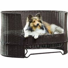 $167.63-$184.99 Comfortable, Durable, Stylish. The Indoor/Outdoor Dog Day Bed is the perfect place for a doggie nap whether it be on a patio or a living room.This dog bed is made of waterproof poly rattan material and includes a comfortable, tufted outdoor cushion. It's raised platform prevents the cushion from getting water logged on rainy days.