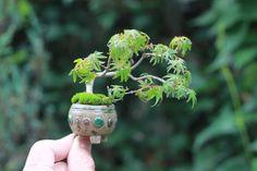 39 Beautiful Bonsai Trees Ideas For Indoors Mini Garden - Dlingoo Bonsai Art, Bonsai Plants, Bonsai Garden, Garden Trees, Bonsai Trees, Moss Plant, Mame Bonsai, Moss Garden, Mini Plants