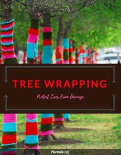 Protect your trees from further damage. How to wrap your tree. Colorado State University, Horticulture, Gardening Tips, Wraps, Rap, Rolls, Lawn And Garden, Urban Homesteading