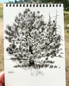 One more from Mt Falcon State Park. Noodler's Lexington Gray on Hero M86…