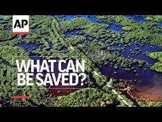 Episode 12 - Everglades Evolution | What Can Be Saved? | AP - YouTube Florida Everglades, Everglades National Park, Wildlife Conservation, Global News, Destruction, Climate Change, Evolution, City Photo, Restoration