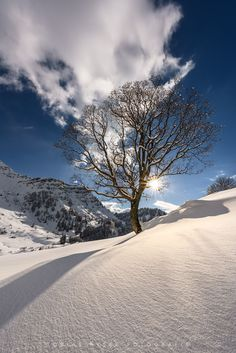 Tree of Light by Tobias Ryser Forest Flowers, Tree Forest, Cool Photos, Beautiful Pictures, Cosy Winter, Winter White, I Love Snow, Winter Magic, Snowy Mountains