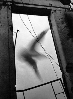 Heinz Hajek-Halke, Le cauchemar II, 1950