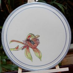 """Botanical Illustrated plate, West Australian """"Dancing Orchid"""" or """"Bee Orchid"""" (Caladenia discoidea)   Dianne Collins, Melbourne"""