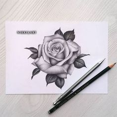 Learn To Draw A Realistic Rose - Drawing On Demand Future Tattoos, New Tattoos, Body Art Tattoos, Sleeve Tattoos, Rose Drawing Tattoo, Tattoo Sketches, Tattoo Drawings, Rose Drawings, Drawing Flowers