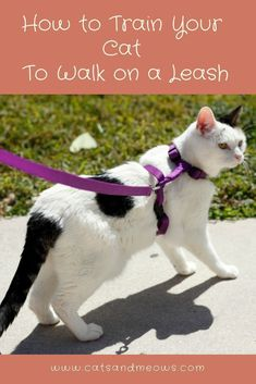 If you plan to train your cat to walk on a leash, you've come to the right place. Here's what you need to know. #ilovemycat #cattraiing #happycat