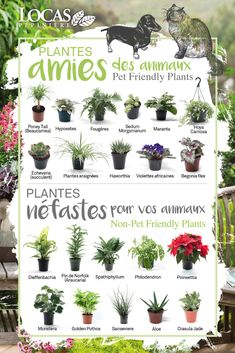 Herb Garden, Garden Plants, House Plants, Potted Plants, Indoor Plants, Chat Wallpaper Whatsapp, Cat Friendly Plants, Decoration Plante, Green Cleaning