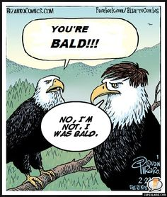 Bald eagles--quotes from Seinfeld.