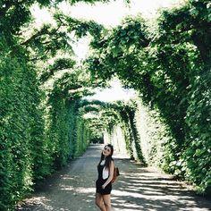 Getting lost in the Schönbrunn palace gardens🌿. Palace Garden, Vienna, Austria, Country Roads, Gardens, Lost, Europe, Explore, World