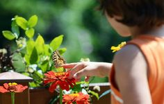 How To Create The Best Garden To Attract Butterflies  http://www.rodalesorganiclife.com/garden/butterfly-gardening