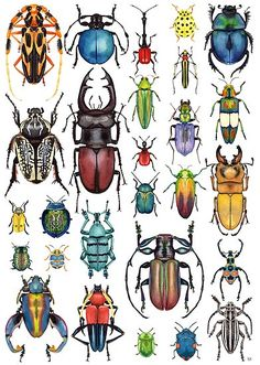 """'Beetle Collection' Poster by Kelly King - Aquarell und Tusche Von 2016 Reihe """"Das Leben und Träume von Shadow Puppets ' Art And Illustration, Illustrations, Inspiration Art, Art Inspo, Beetle Drawing, Bugs Drawing, Posca Art, Bug Art, Insect Art"""