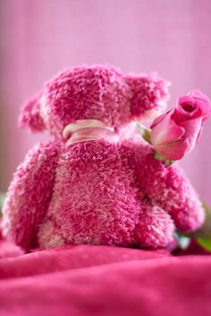 Pink Bear Behind Holding Pink Rose Photograph