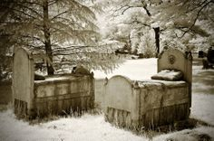 Forest Hill Cemetery, Boston Mass by Paula Cravens