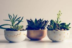 Decoração de escritório com plantas