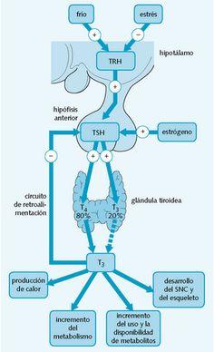 Regulación hormonal de las hormonas tiroideas