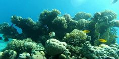Coral Reef Pictures, River, Outdoor, Outdoors, Outdoor Games, The Great Outdoors, Rivers